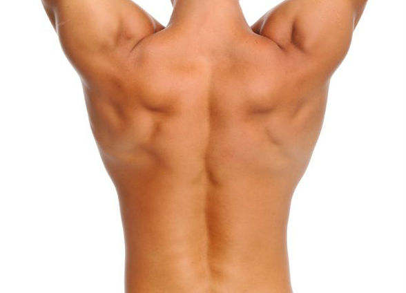 Human Back with skin covering all the internal structures.