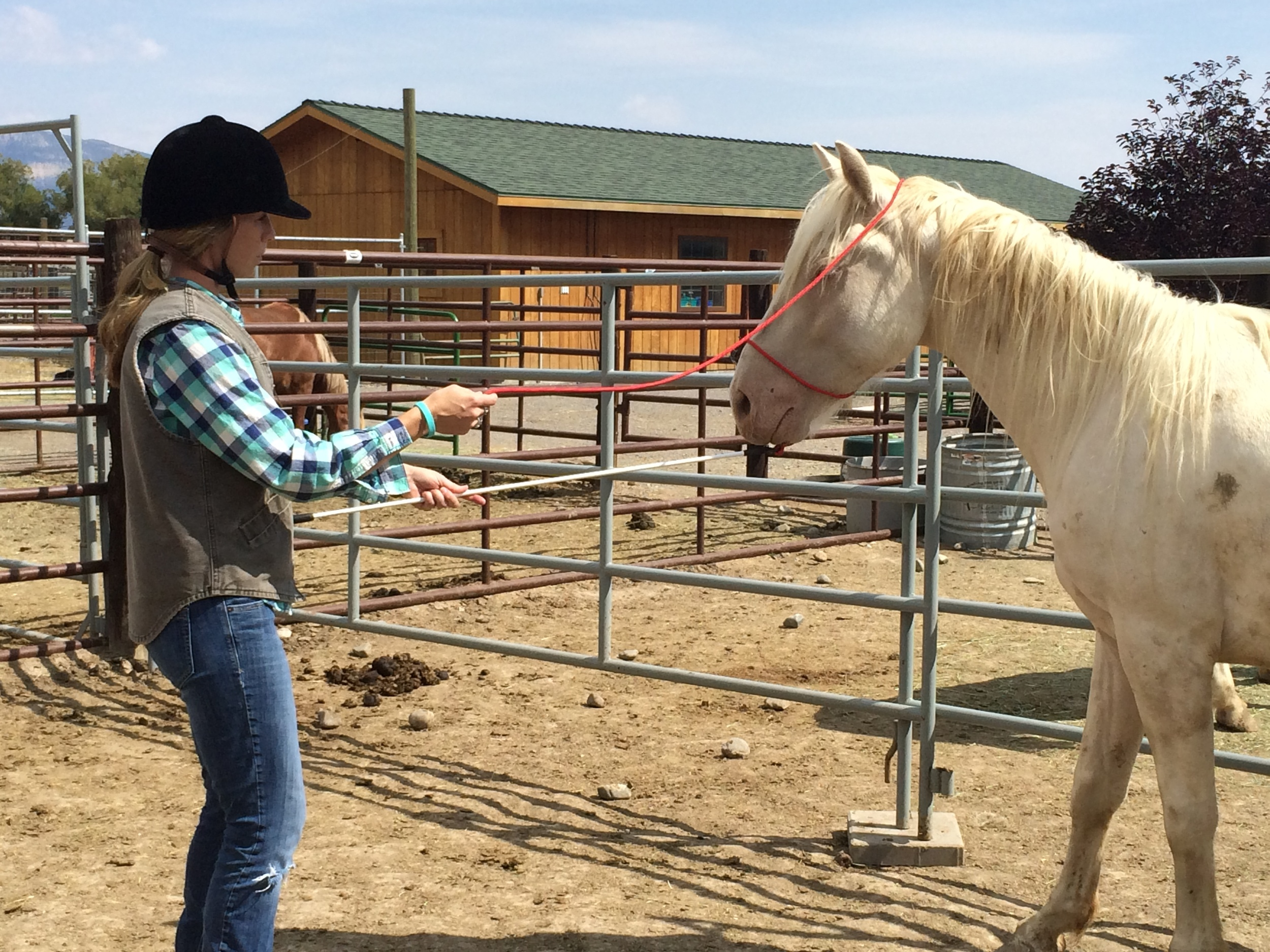 Horseman's rope gentling a McCullough Peaks mustang at the 2014 Reach out to the Untouched Horse Clinic.
