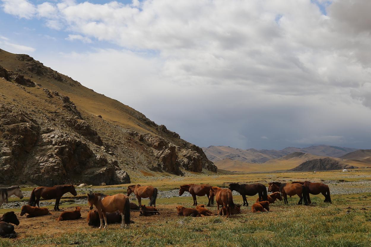 water-for-water-mongolia-clean-water-4.jpg