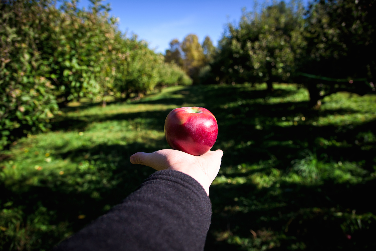 Hansel's Orchard, North Yarmouth.