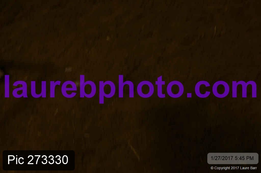 Pic 273330.jpg