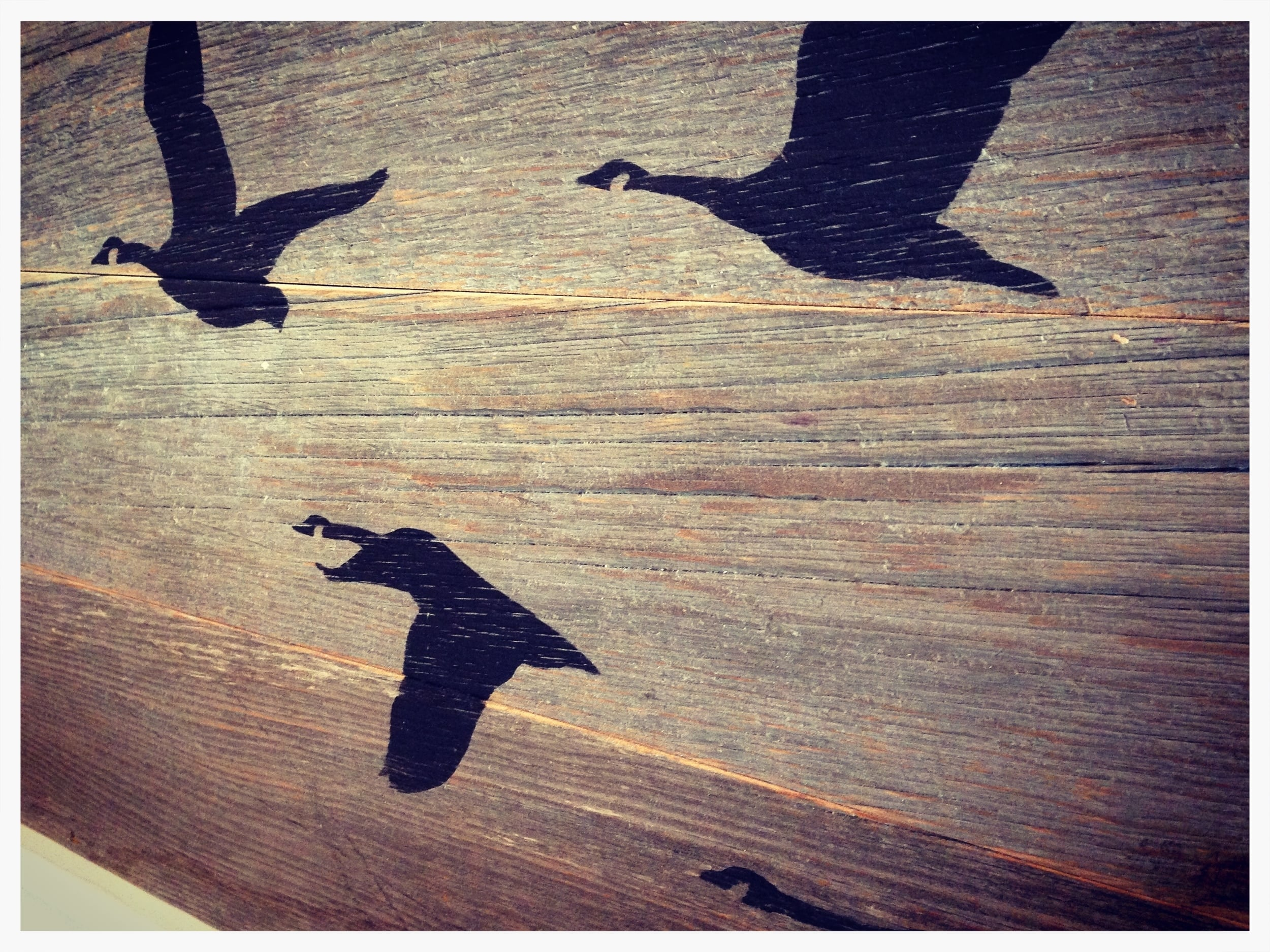Canada Geese, 2015