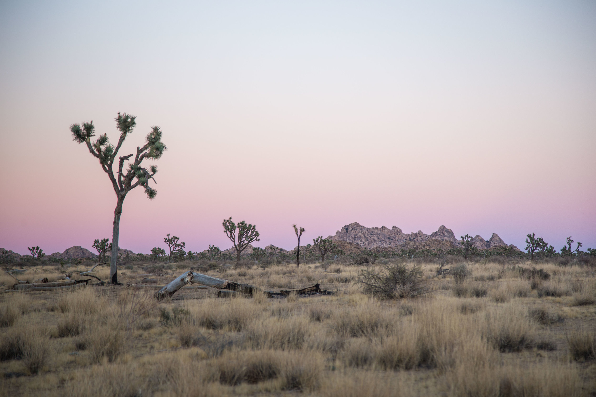 Joshua Tree Expedition | shot by Ting