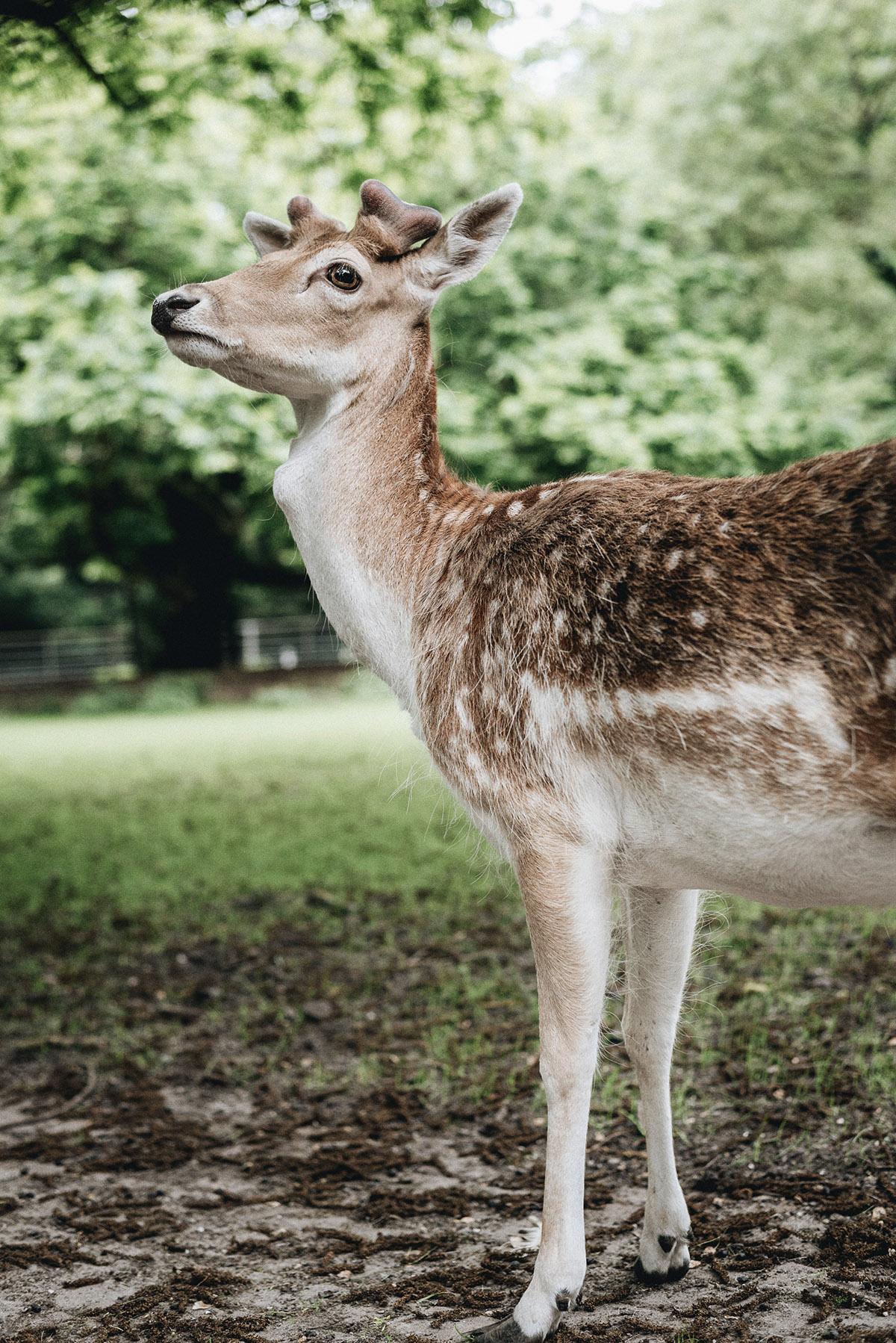 moments-deer