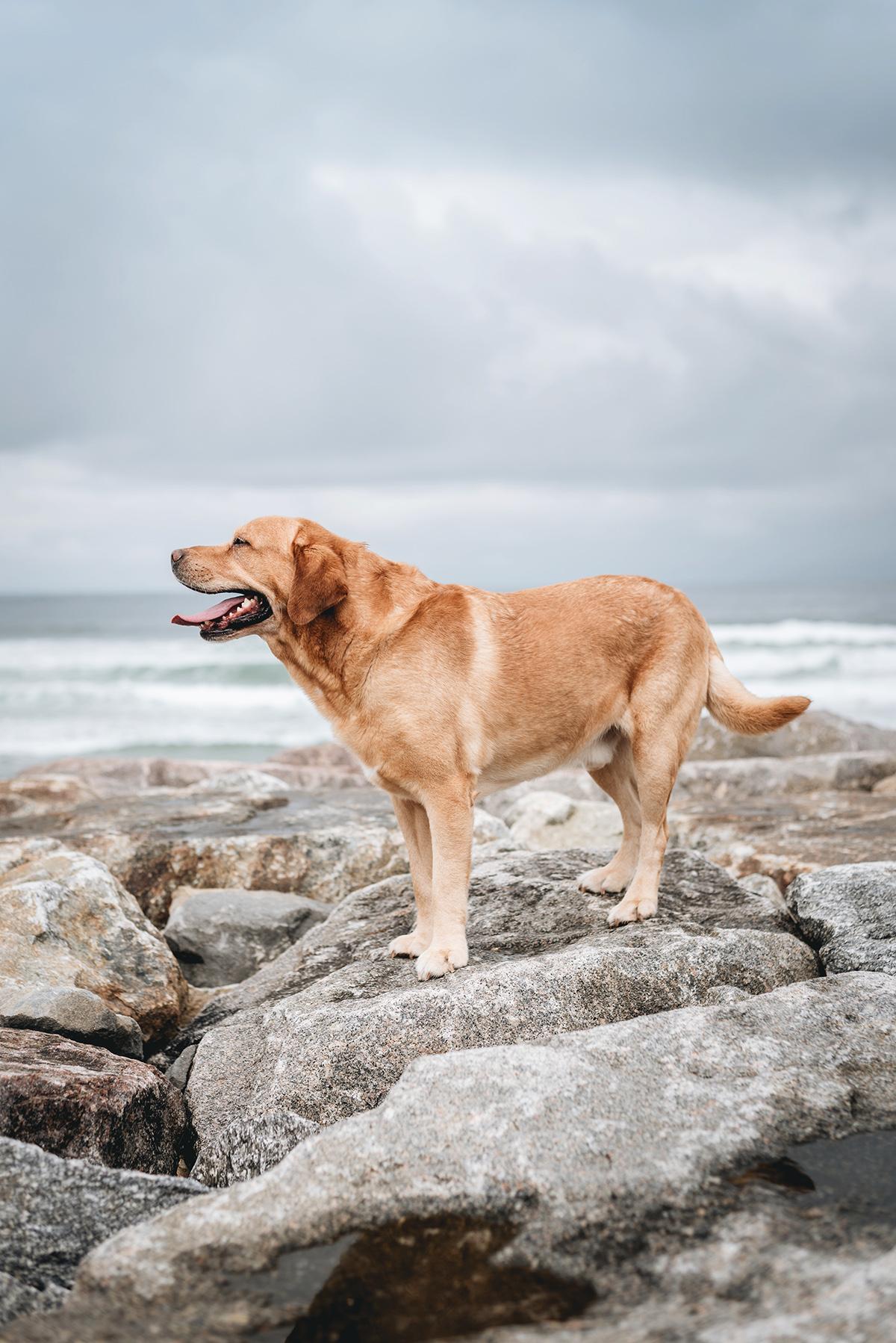moments-dog