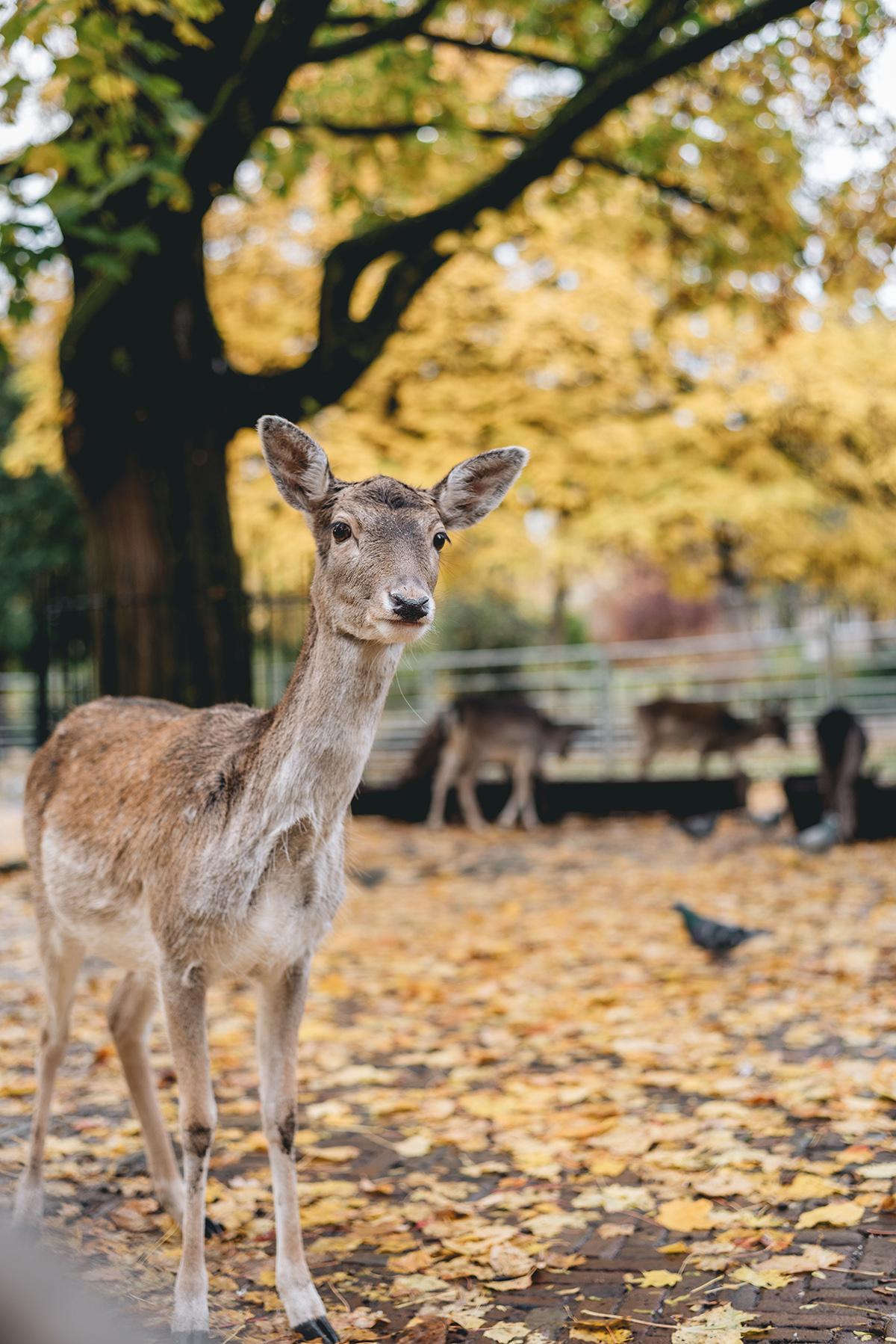 perks of autumn