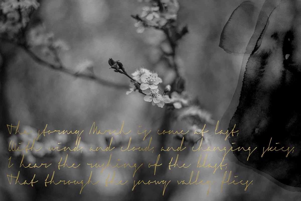 blossom-spring-poem-collage-Patricia-martins-yellowish-2019