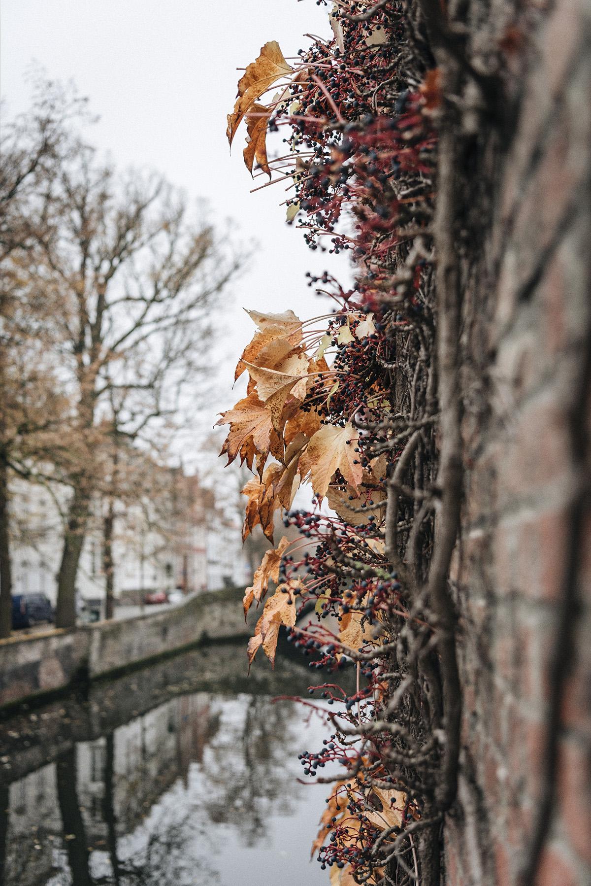 Autumn Bruges - Patricia Martins Yellowish blog