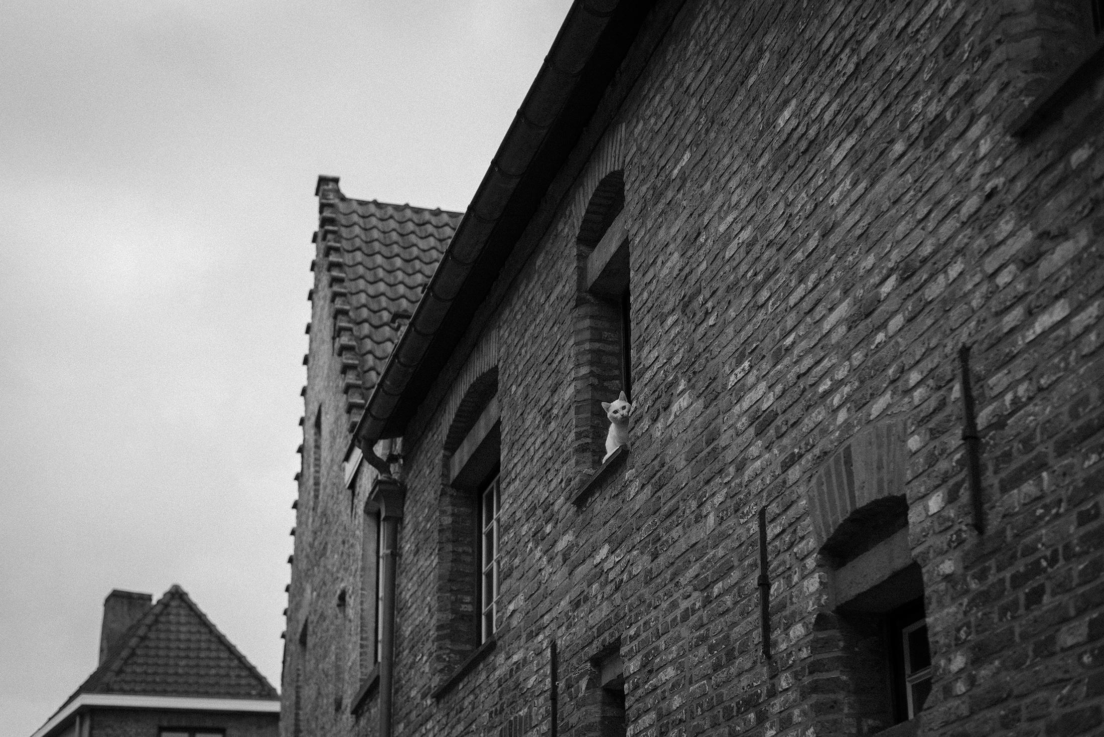 cat window Bruges Belgium - black and white photograph - Patricia Martins Yellowish blog