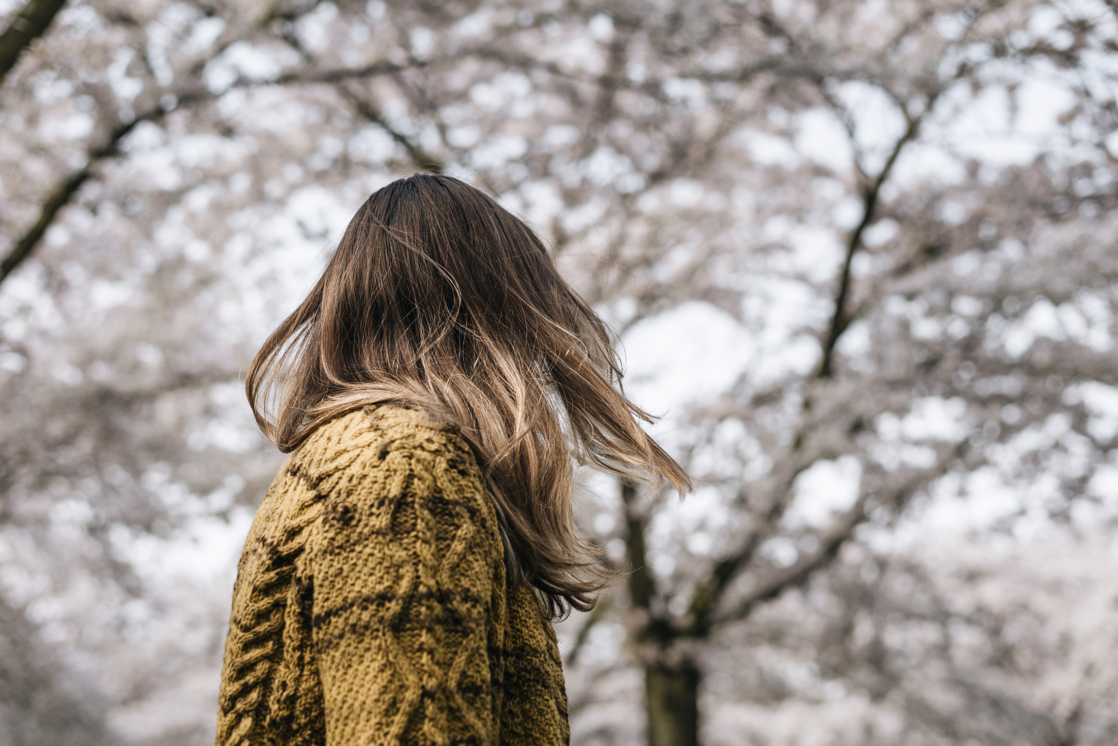 faceless portrait sakura