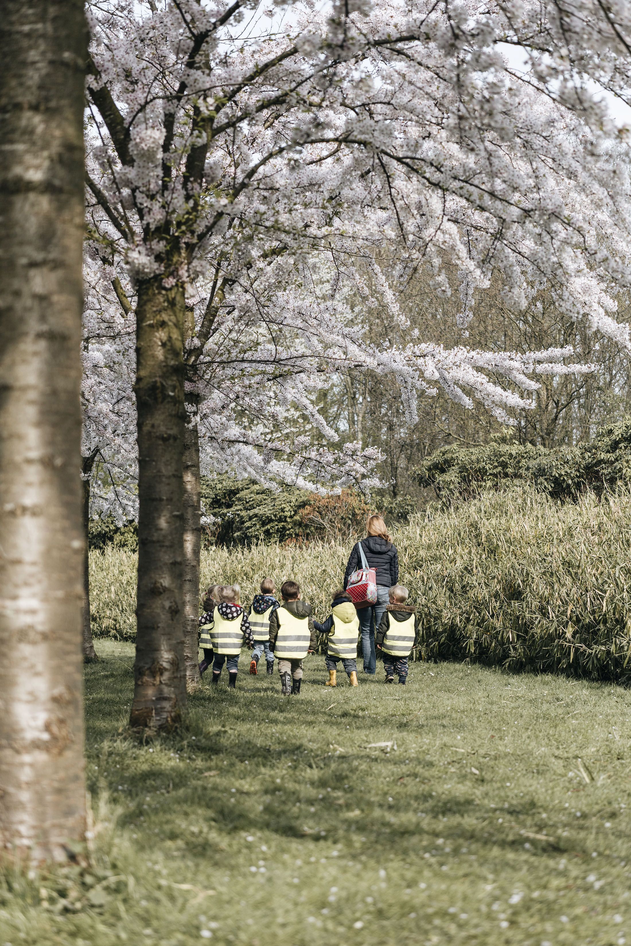 children kindergarden hanami park sakura cherry blossom spring flowers