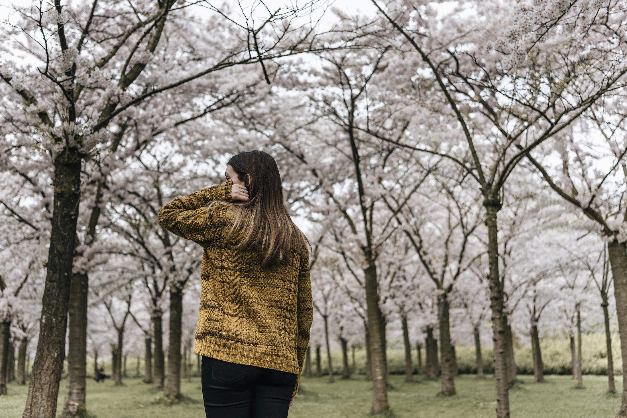 portrait hanami sakura cherry blossom spring