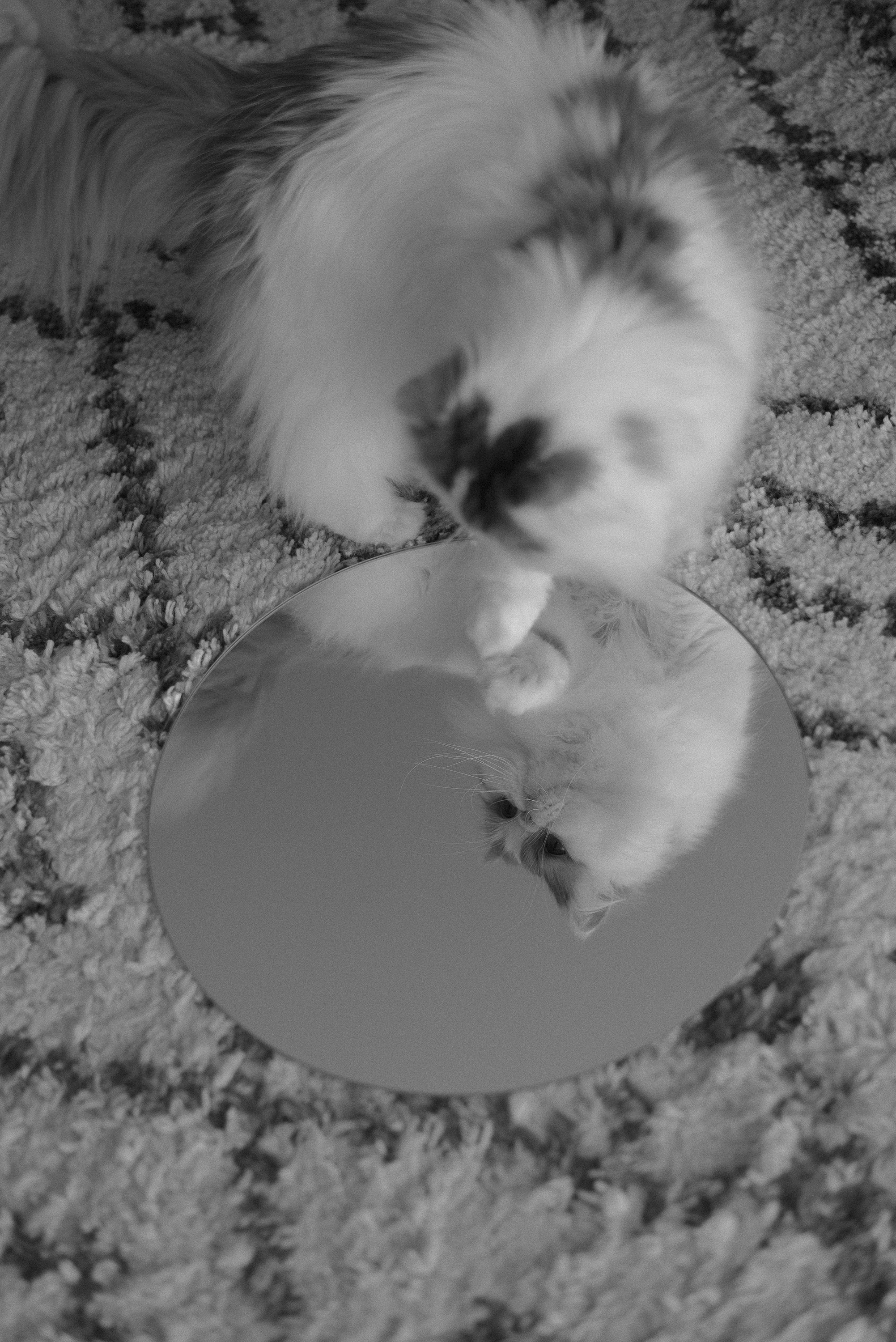 perception mirror conceptual photography cat black and white vintage