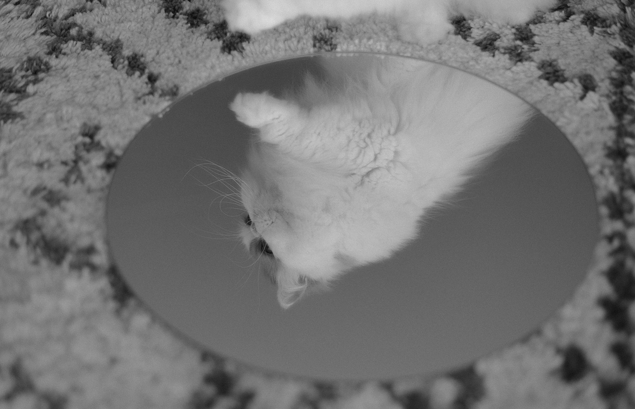 perception conceptual photography cat black and white vintage