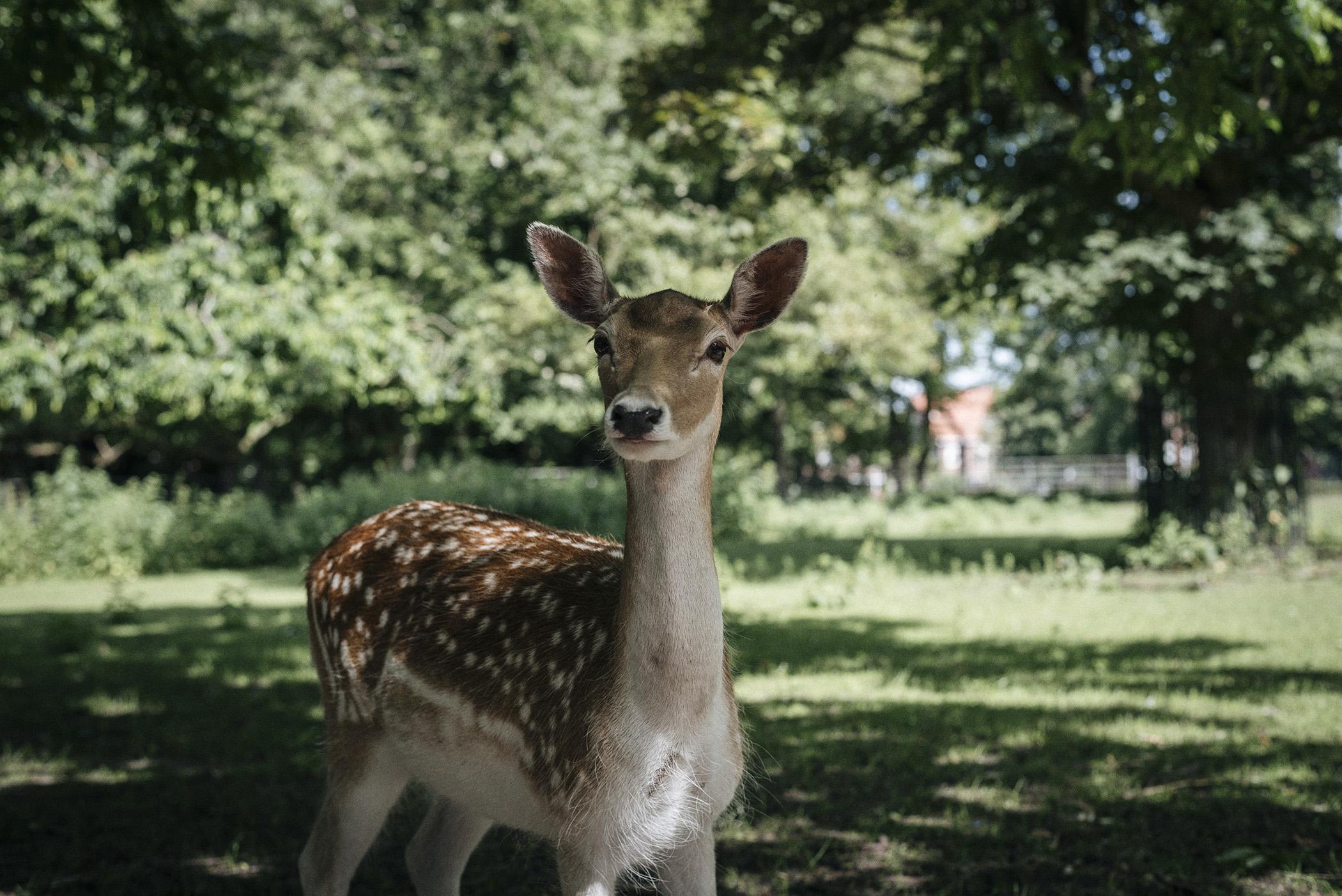 deer park nature