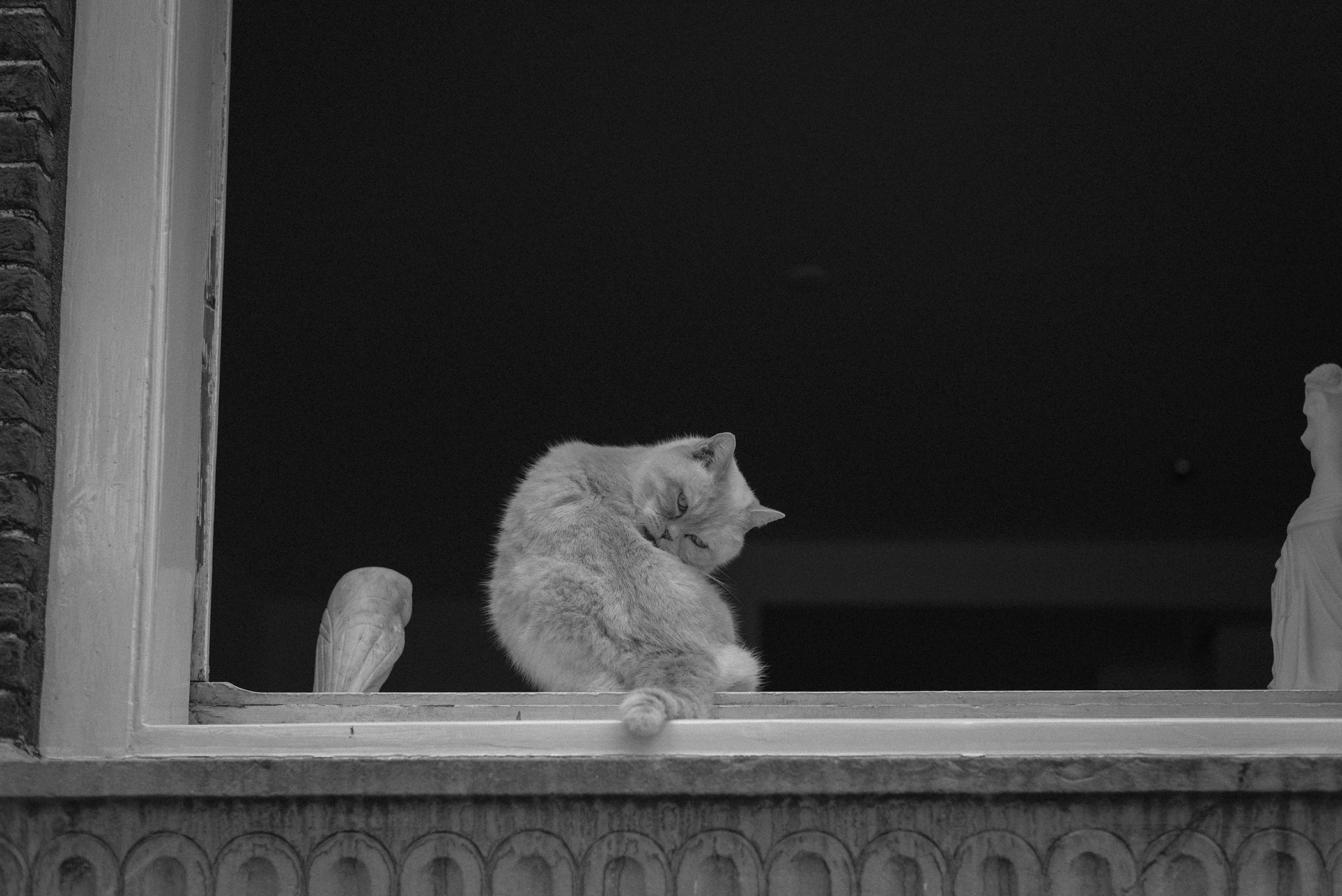 cat by window Netherlands bnw photography
