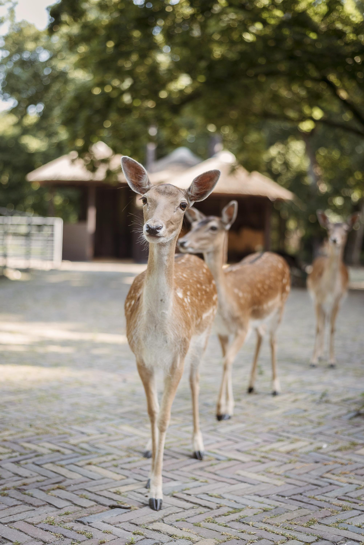 deer friends at park Netherlands