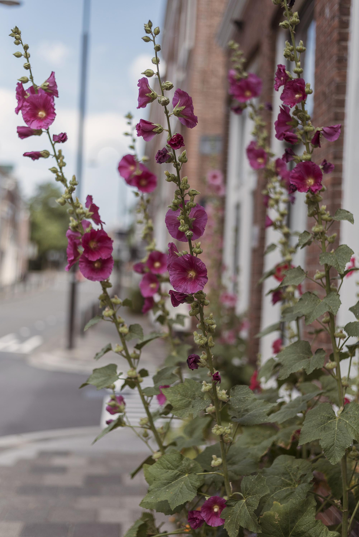 summer flowers street Netherlands