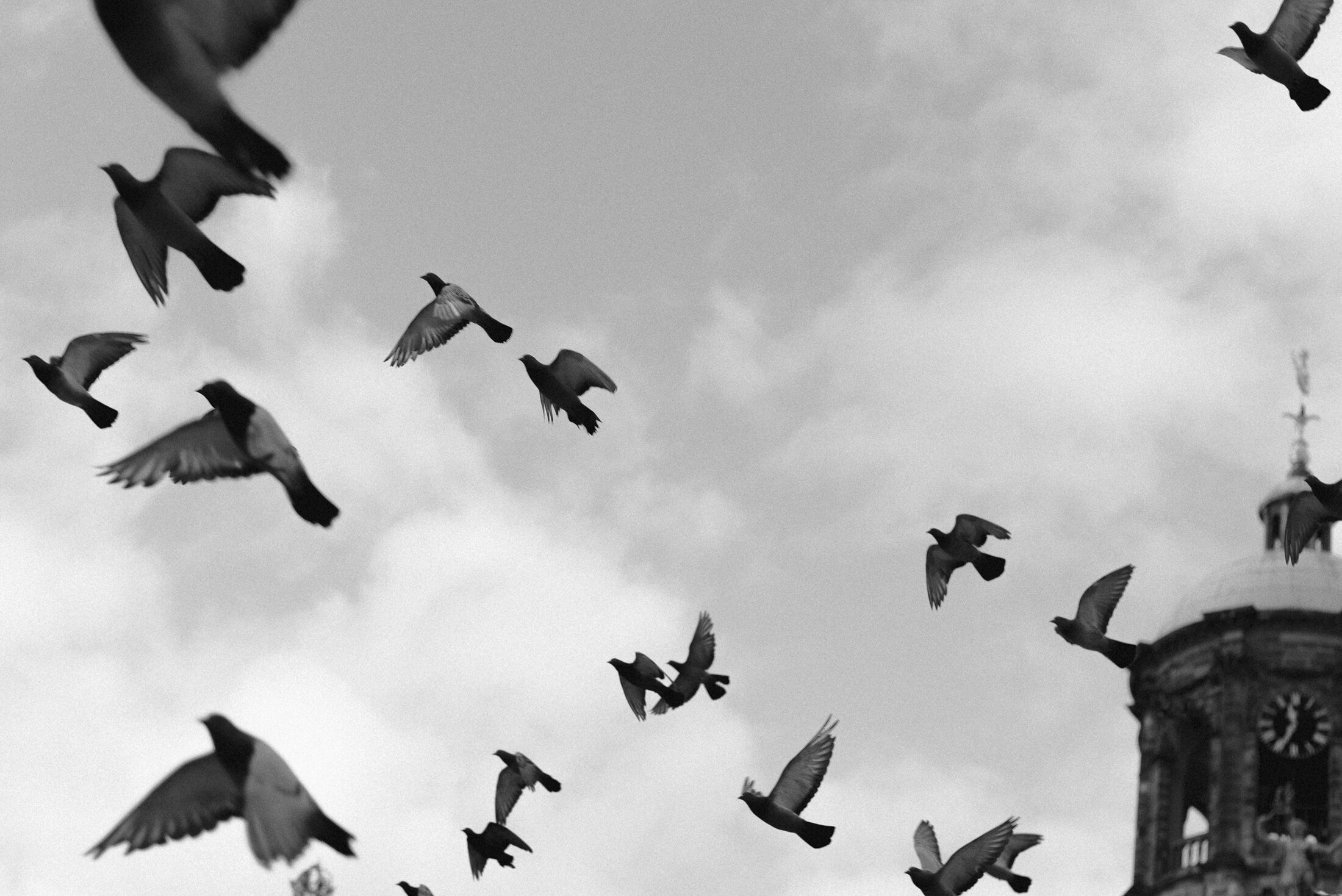 black and white photograph vintage birds flying
