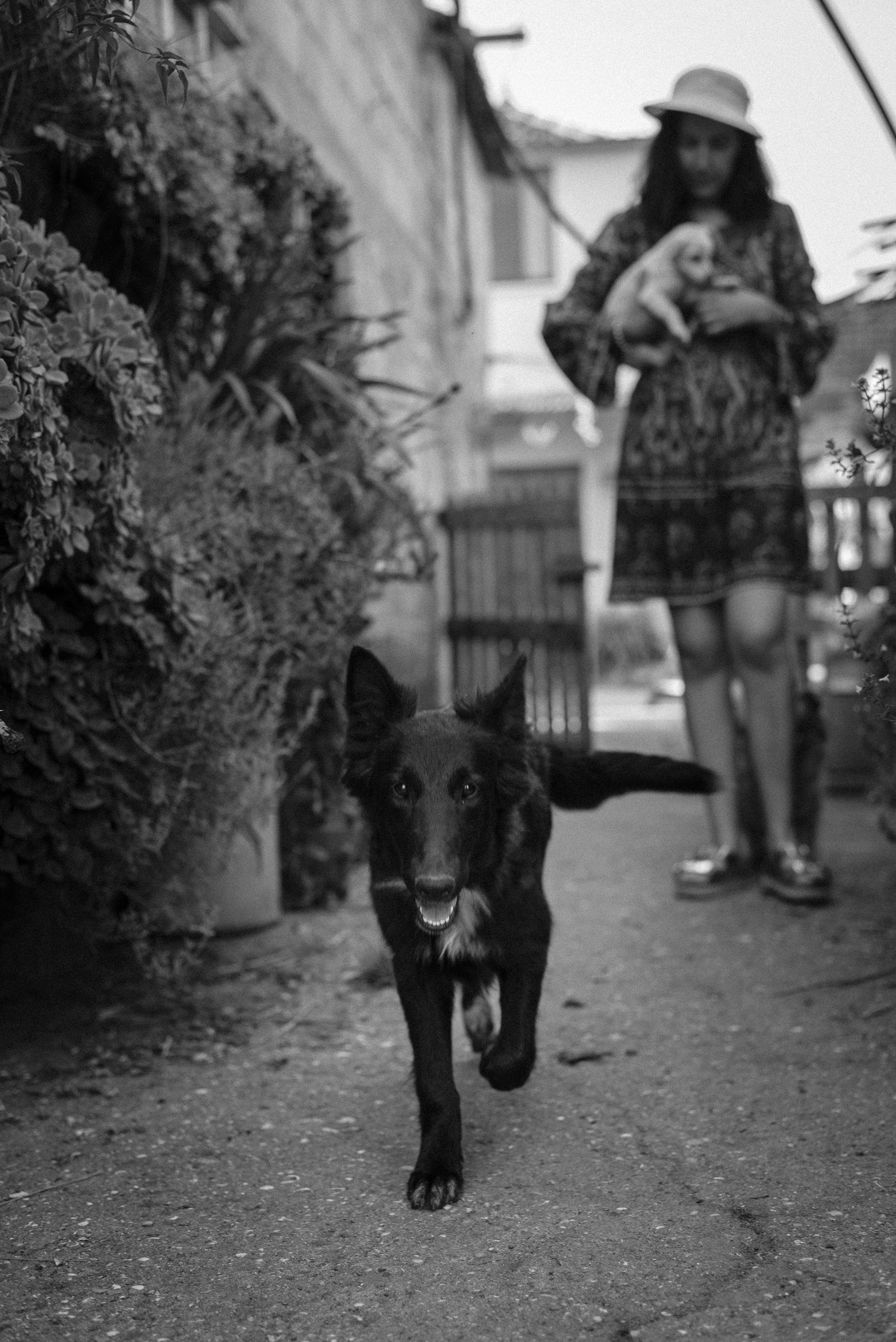 at farm girl and dogs black and white photograph