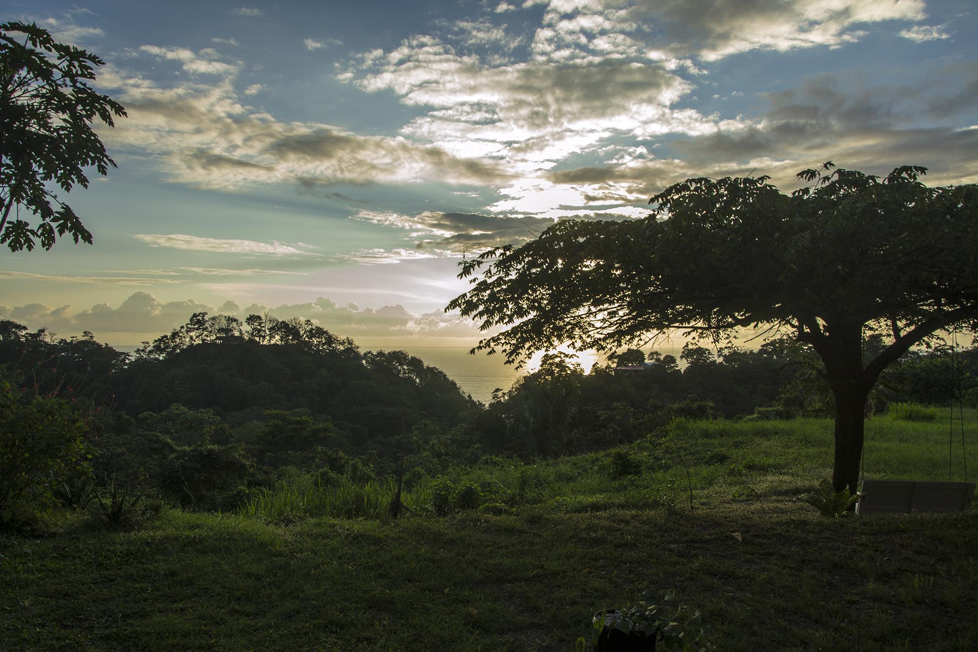 VLC_garden_6.jpg
