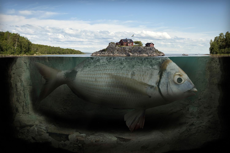 Fishy Island, 2009