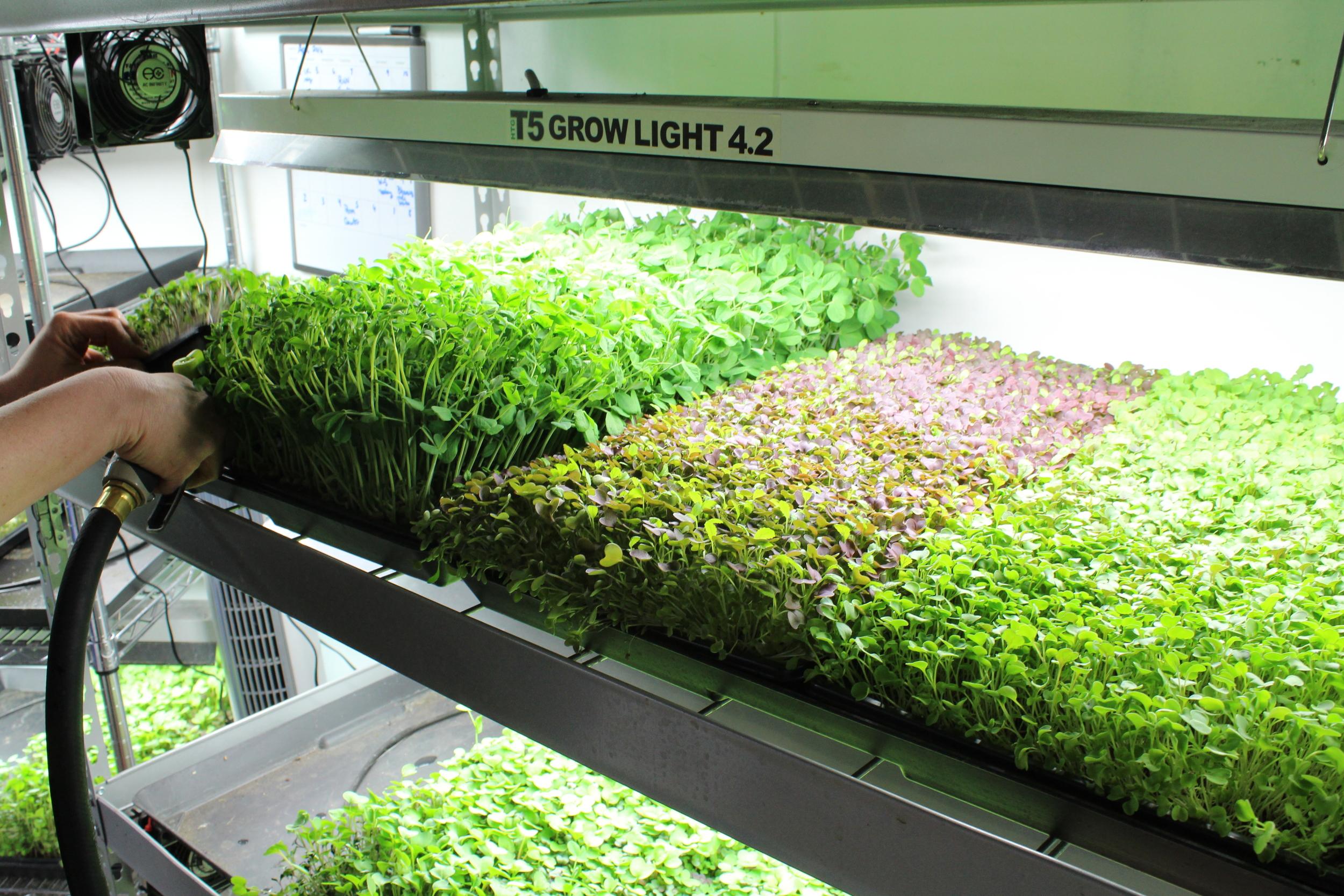 micro-garden.JPG