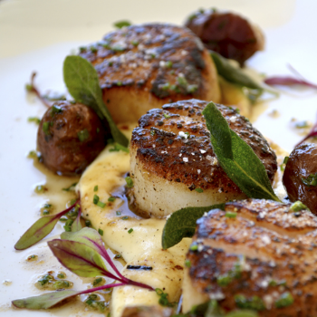 Seared Scallops & Roasted Tarragon Potatoes                     Pair With Nº 4 Signature White Blend