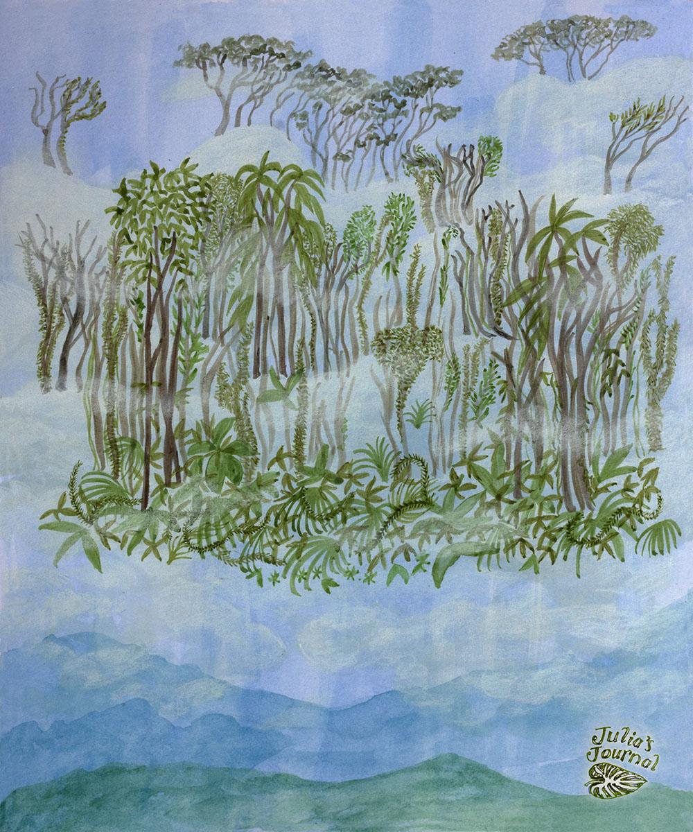 cloud forest 1200.jpg