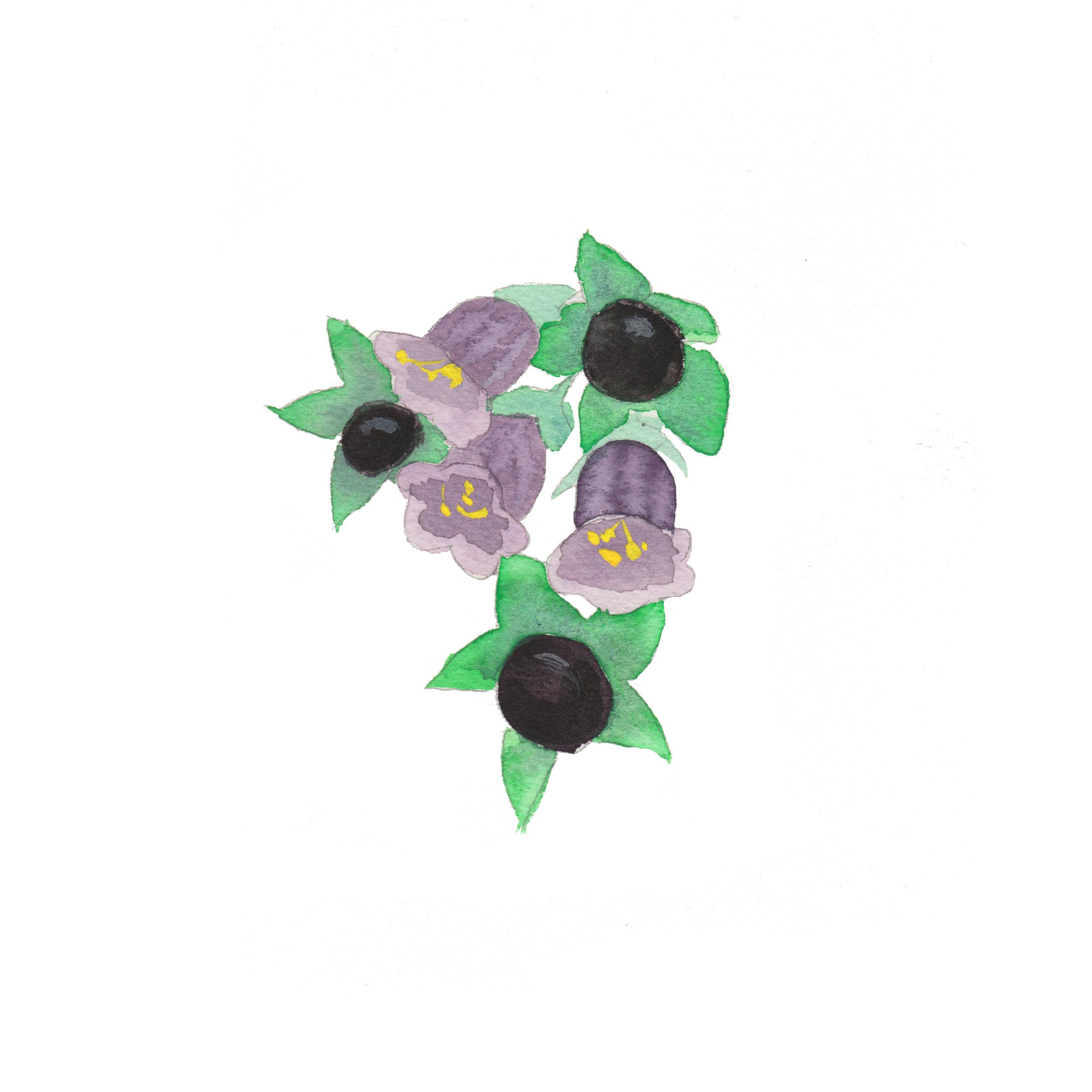 Plant 4 - Belladonna.jpg