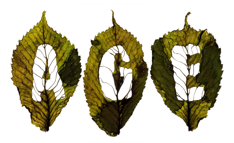 SamScottHunter_leaf-letters.jpg