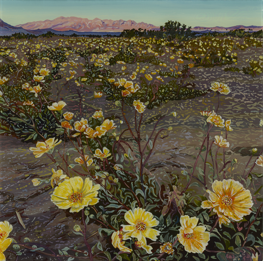 Desert Daisies  Acrylic on plexiglass 12in x 12in 2015