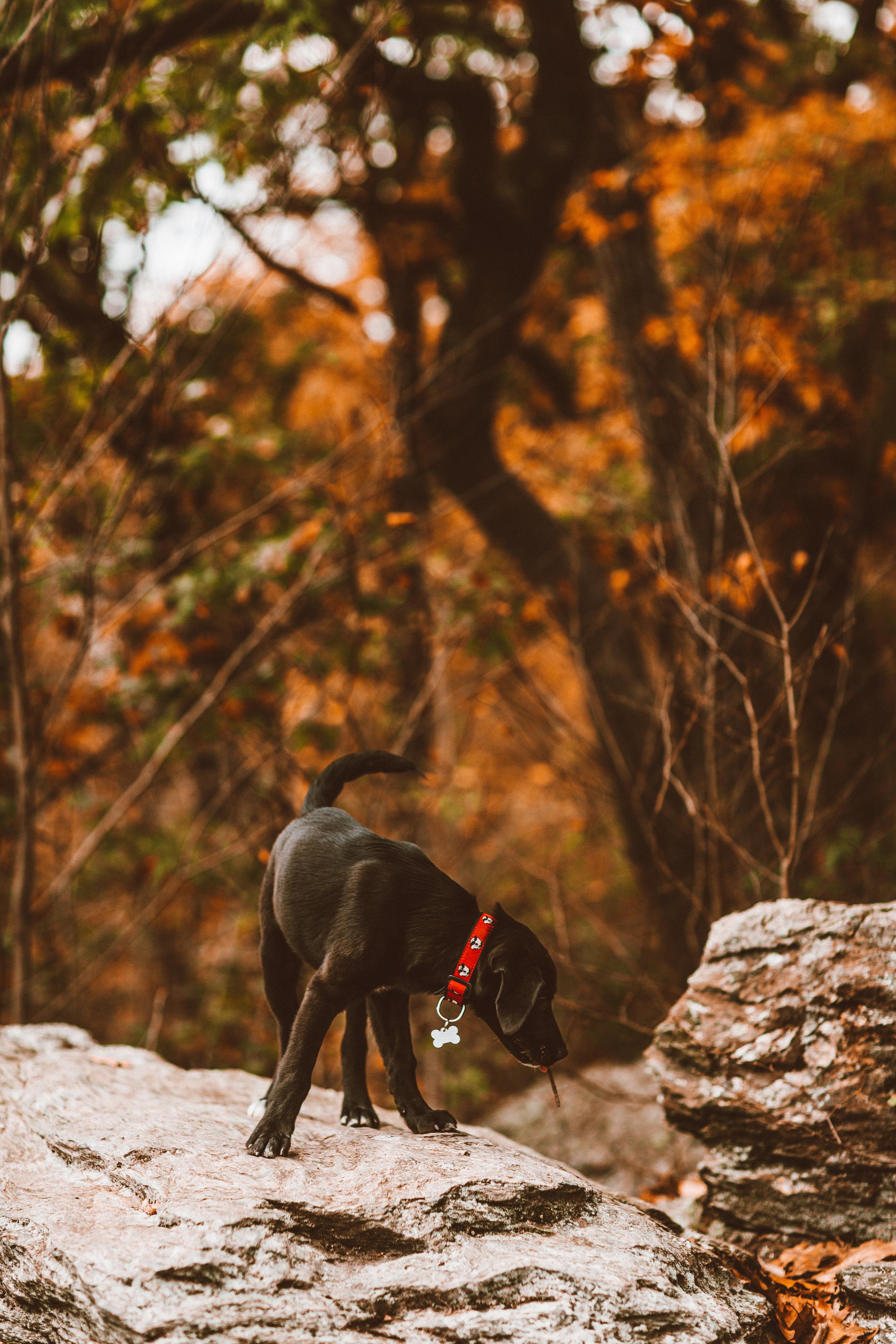 HikingBoys-7.jpg