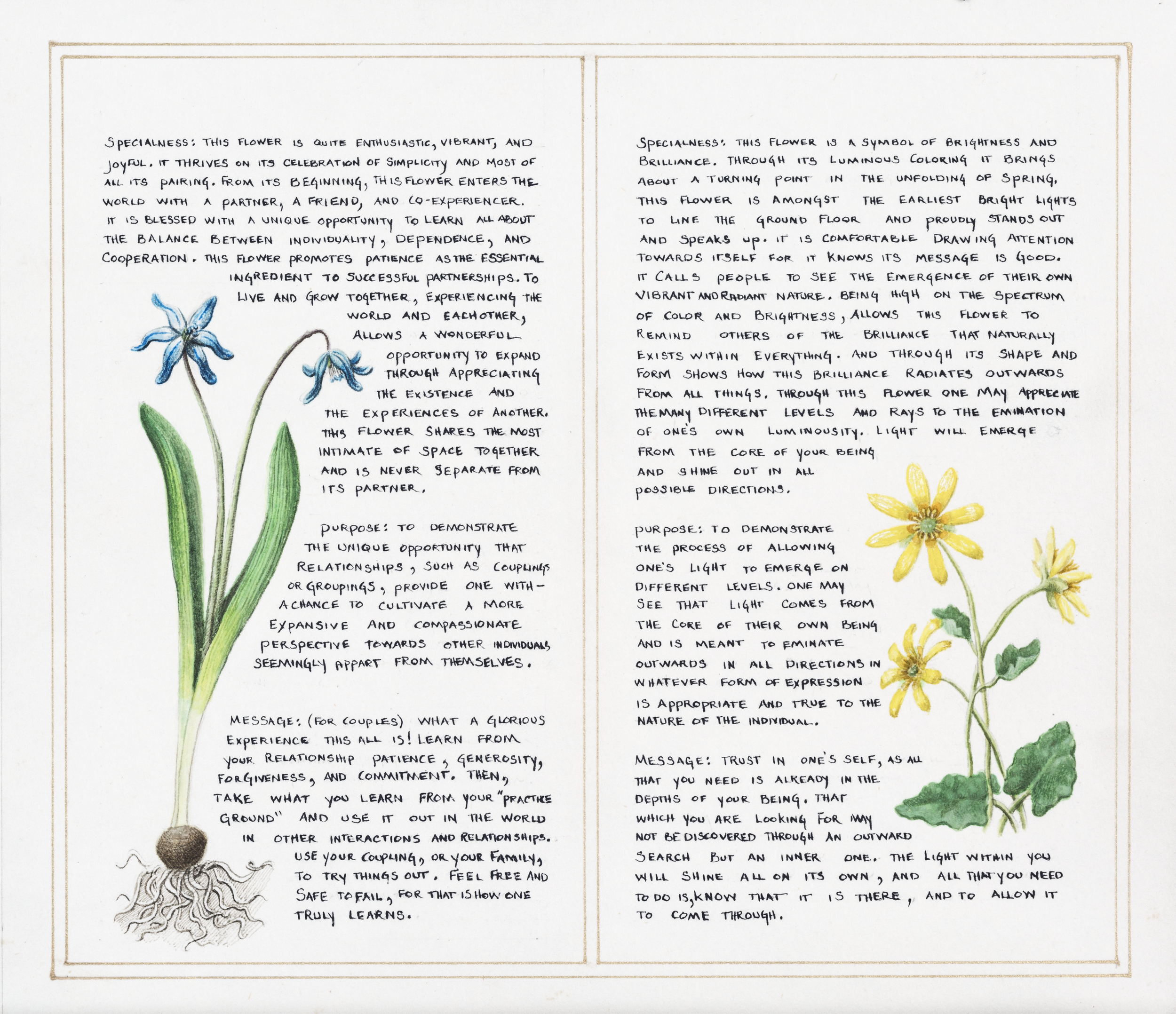 Jonathan Sherman_The Wisdom of the Flowers_crop_2.png