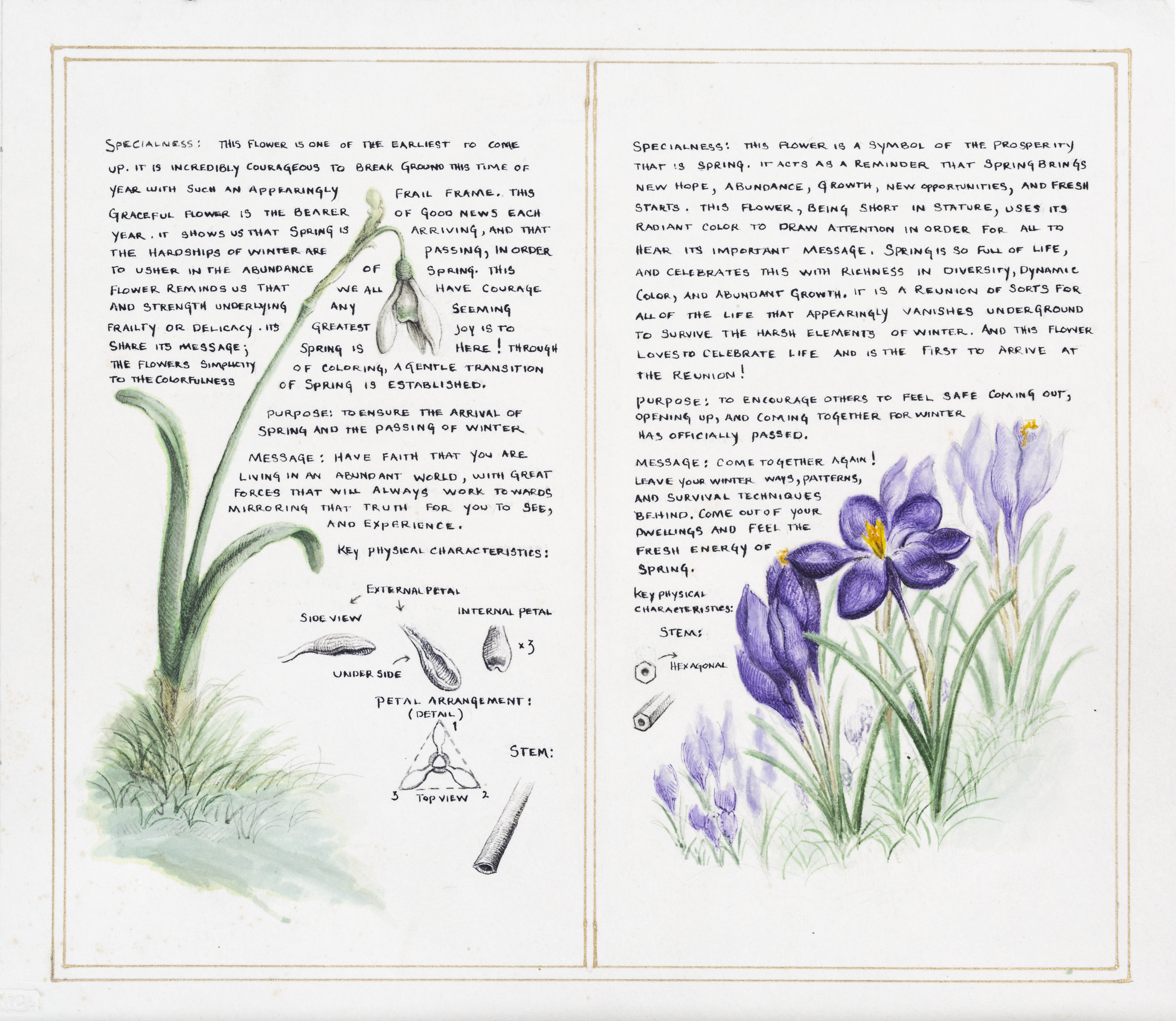 Jonathan Sherman_The Wisdom of the Flowers_crop_1.png