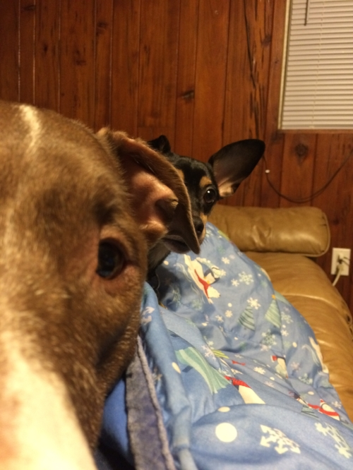[A still image of a close up of my friend's dog Brawny, with Hank peering around Brawny's head in the background.]