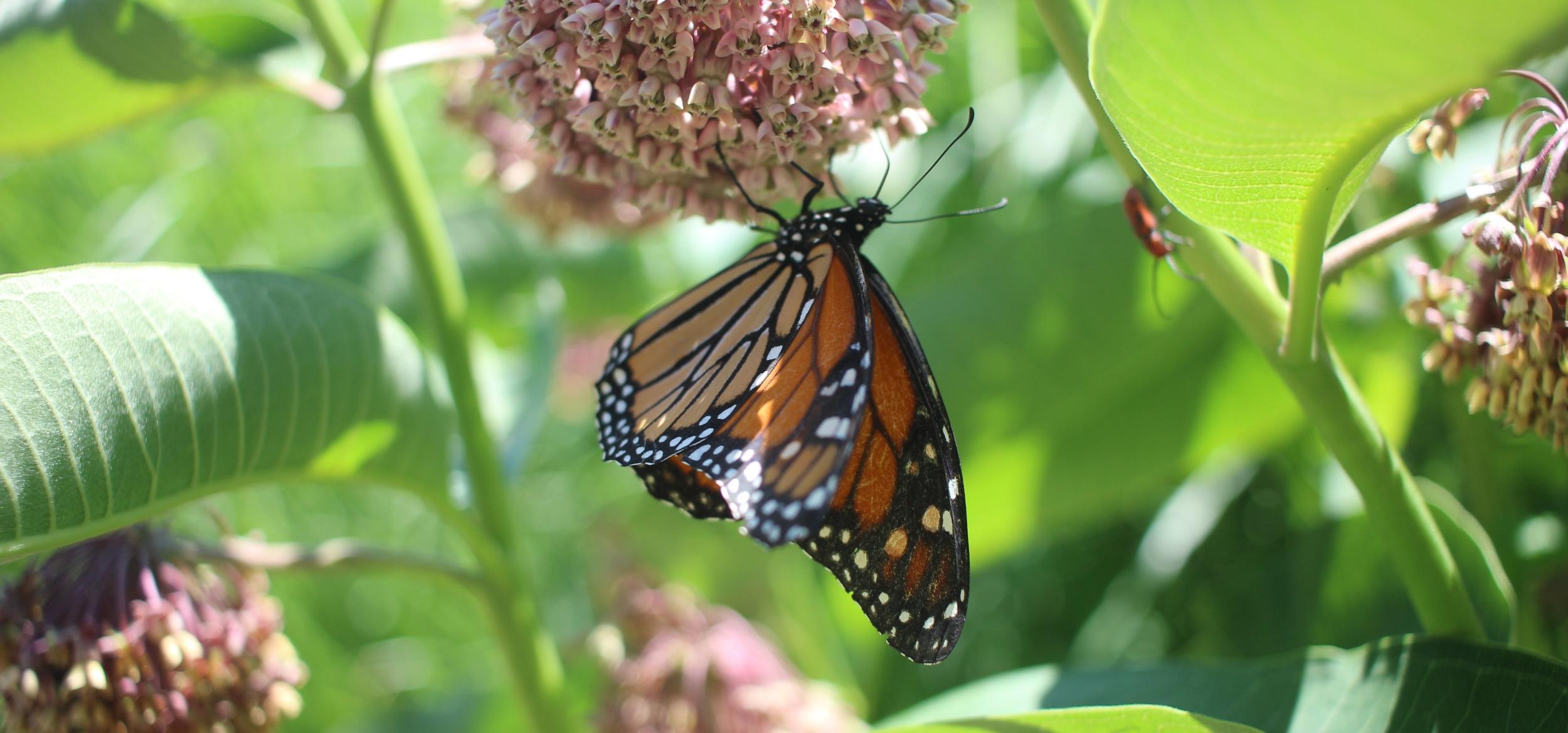 butterfly - 1.jpg