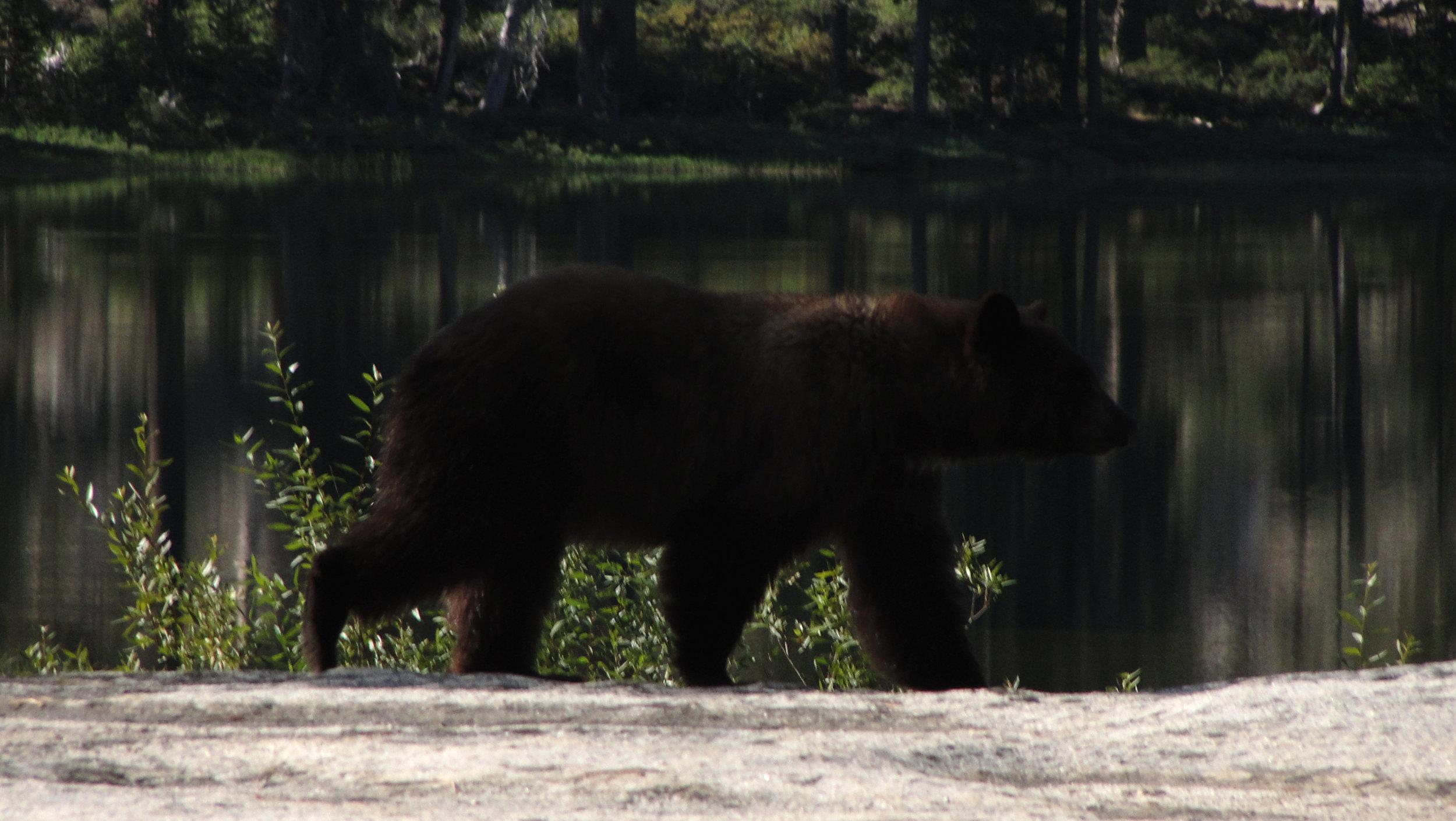 its a bear.jpg