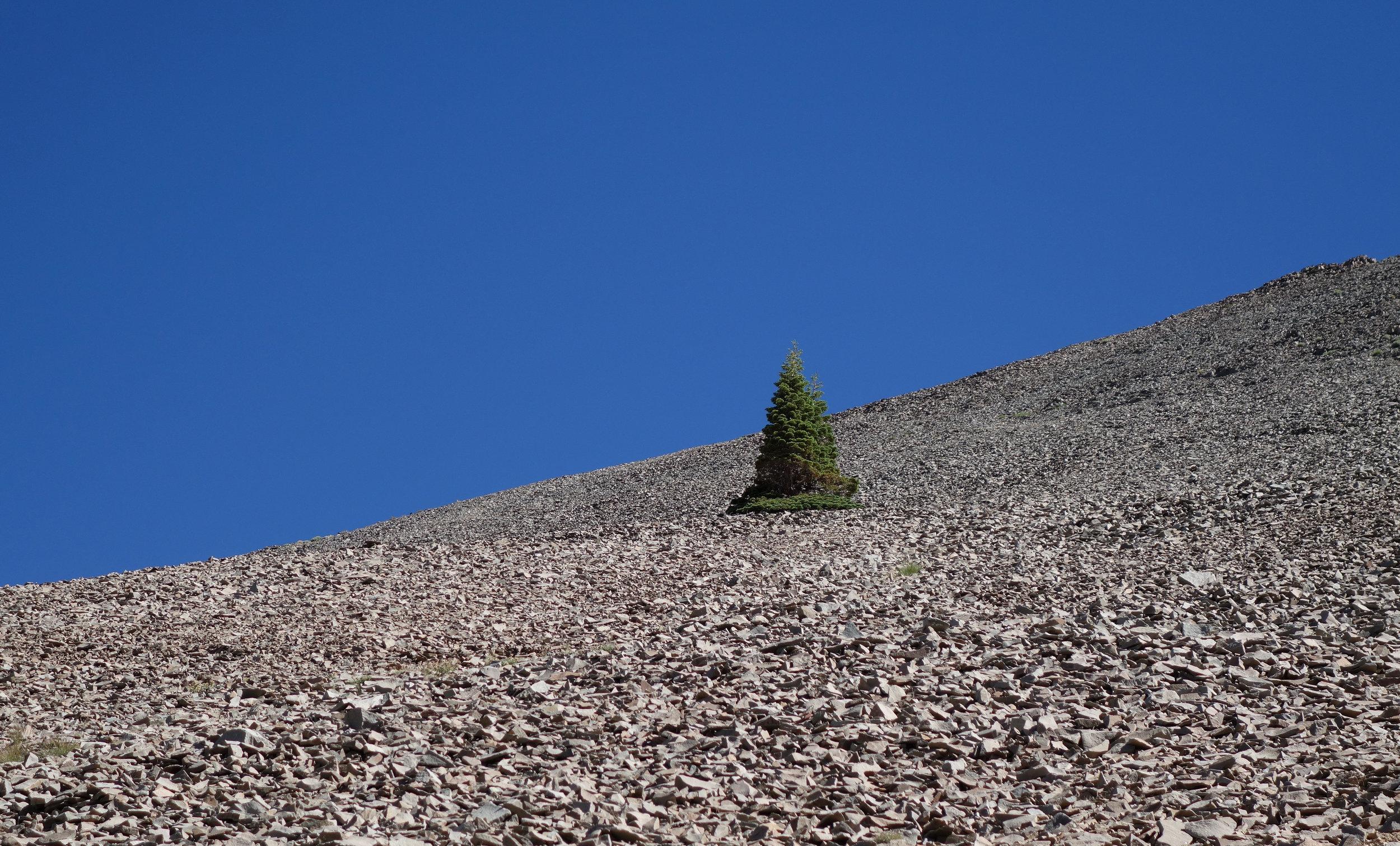 two trees on rocks.jpg
