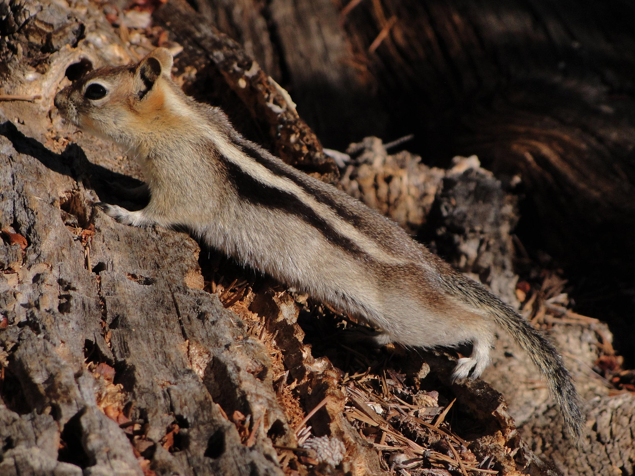 a pensive squirrel.jpg