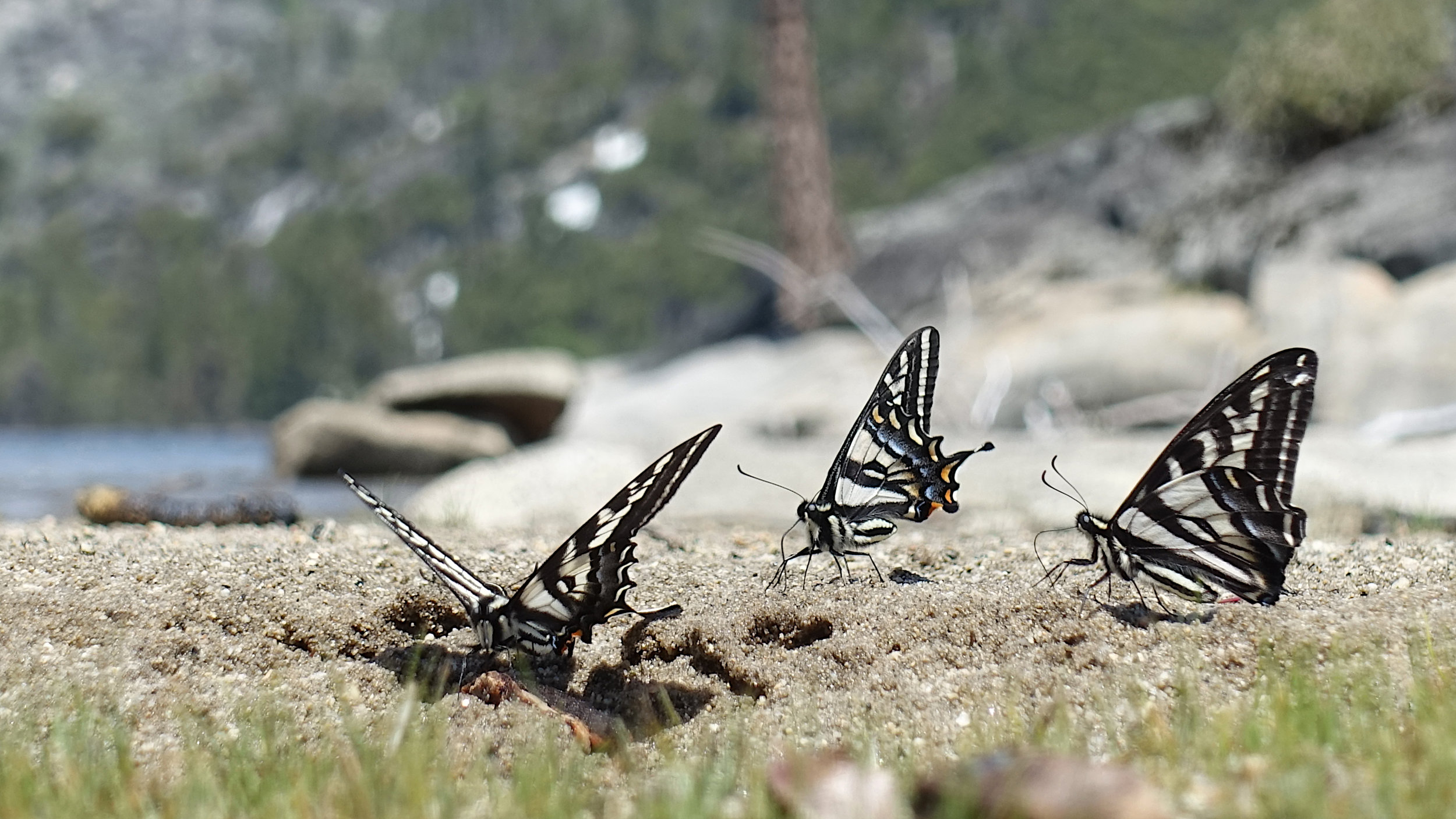 butterflies on beach.jpg