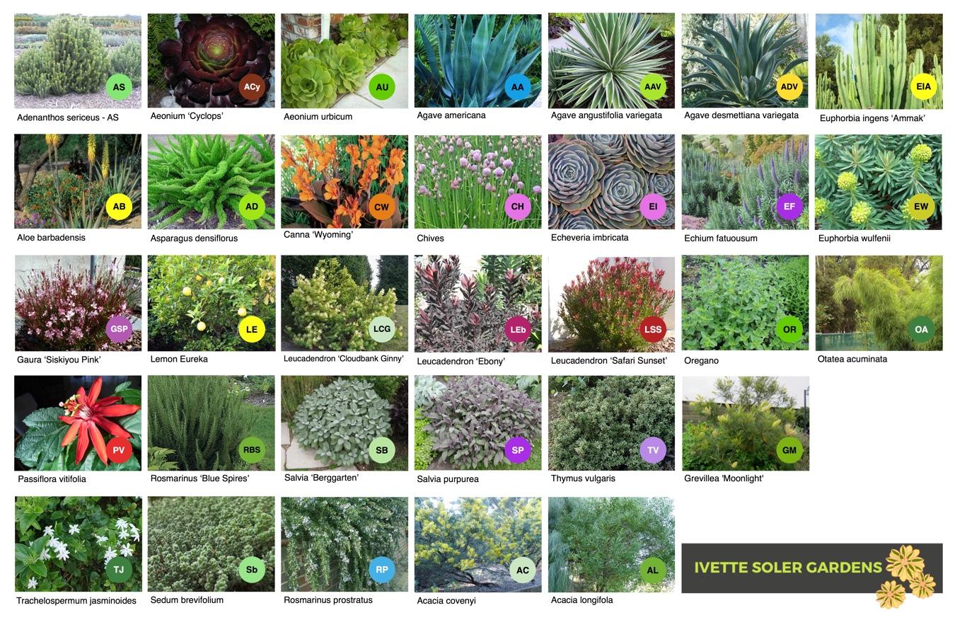 Plant Images & Key