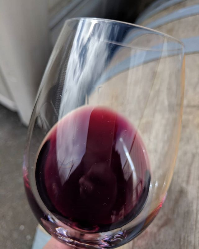 Checking in on the barrels today.  This Pinot Noir from the Ryan Vineyard is really coming along beautifully.  A new vineyard I was fortunate to get grapes from in 2018.  I love this time of year because the wines really begin to open up and show what they are going to become.  I have found that January and February are a challenging time to taste because the wines are finishing malo and I am always a worried mother hen about them. #humboldtwines #pinotnoir #wineandcider #womanwinemaker #sundayfunday