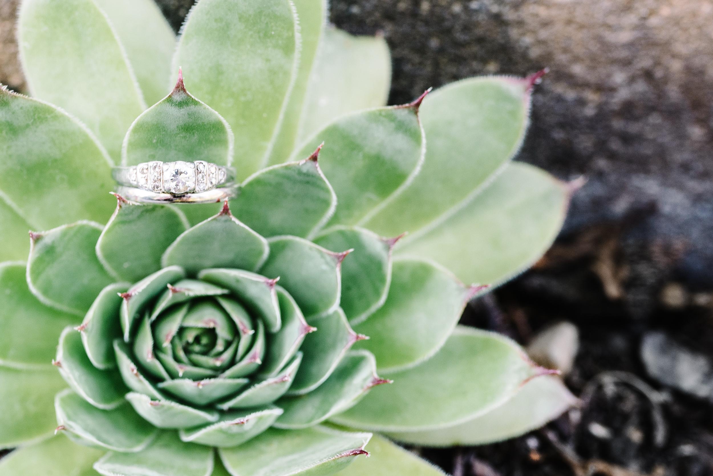 succulent wedding rings