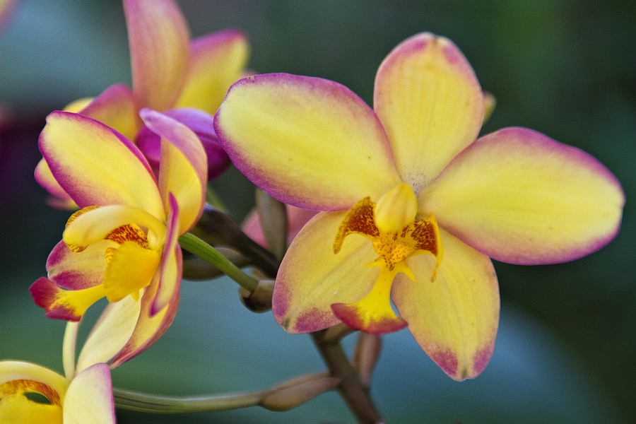pink&yellow orchids_sm.jpg