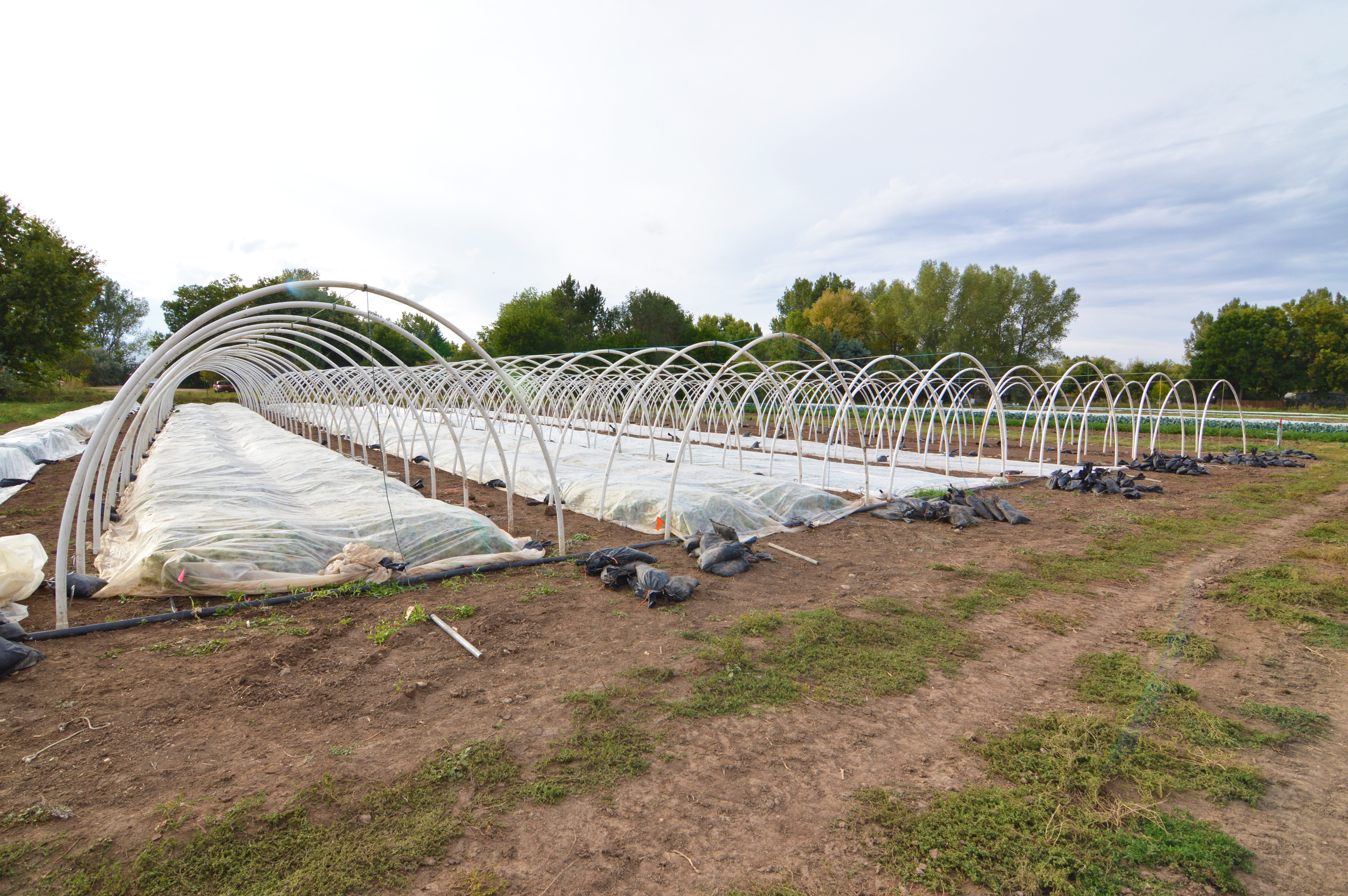 Hoop houses! (Photo by Claire Burnett)