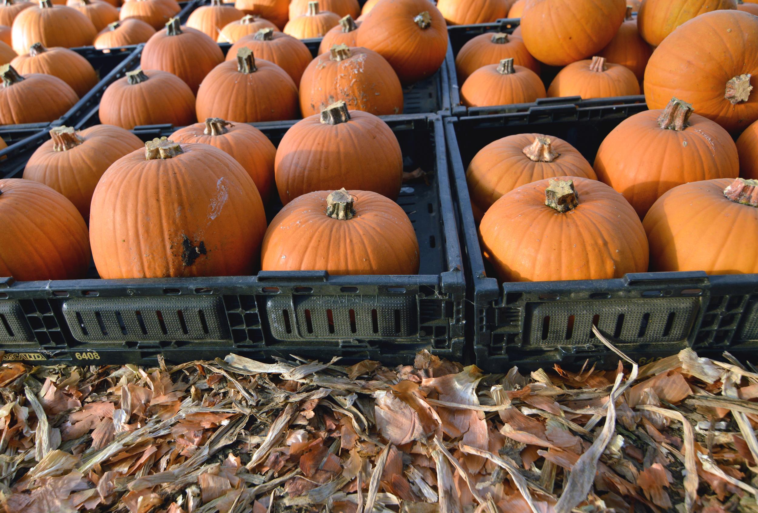 Pumpkin pie anyone?!