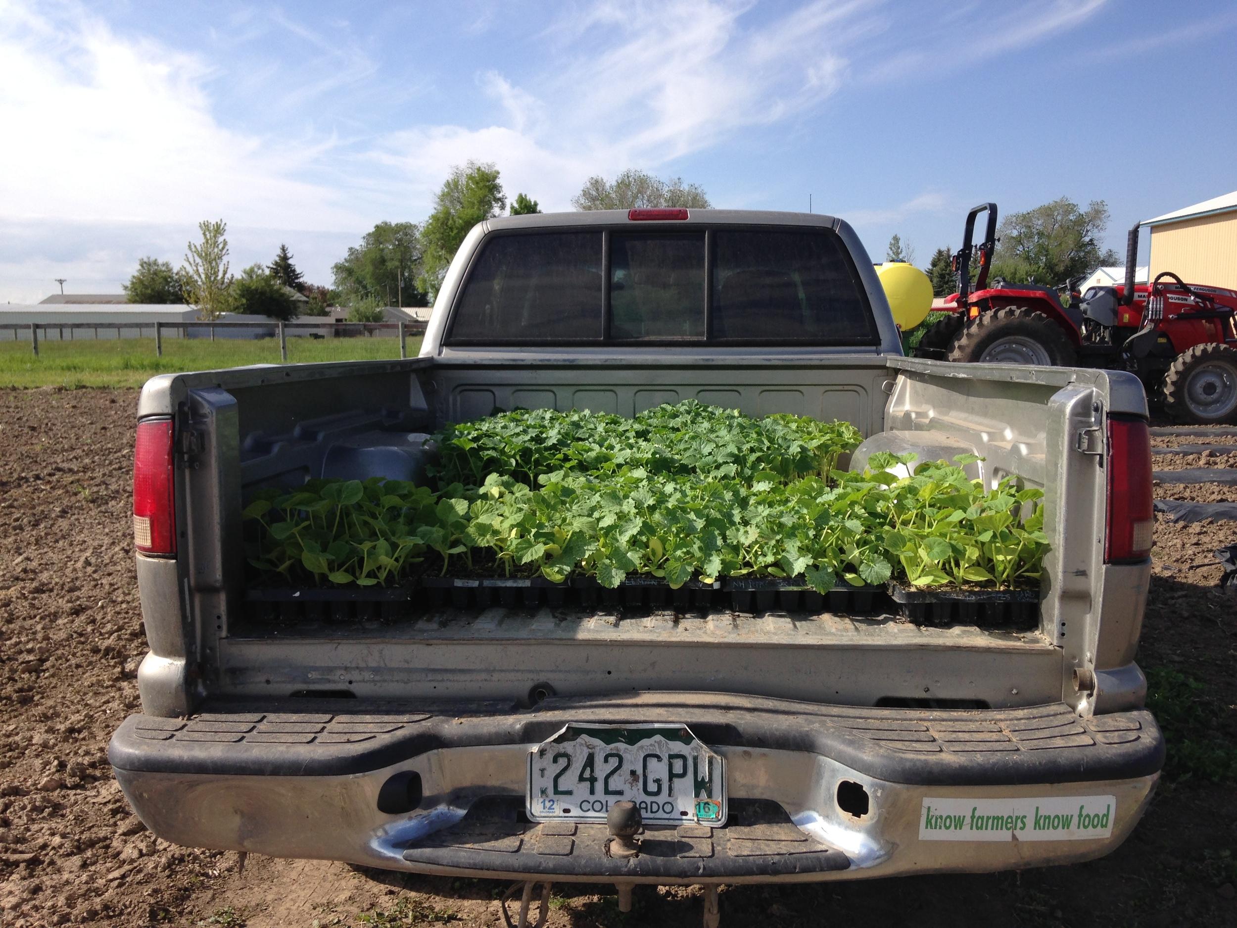 native-hill-farm-truck.jpg
