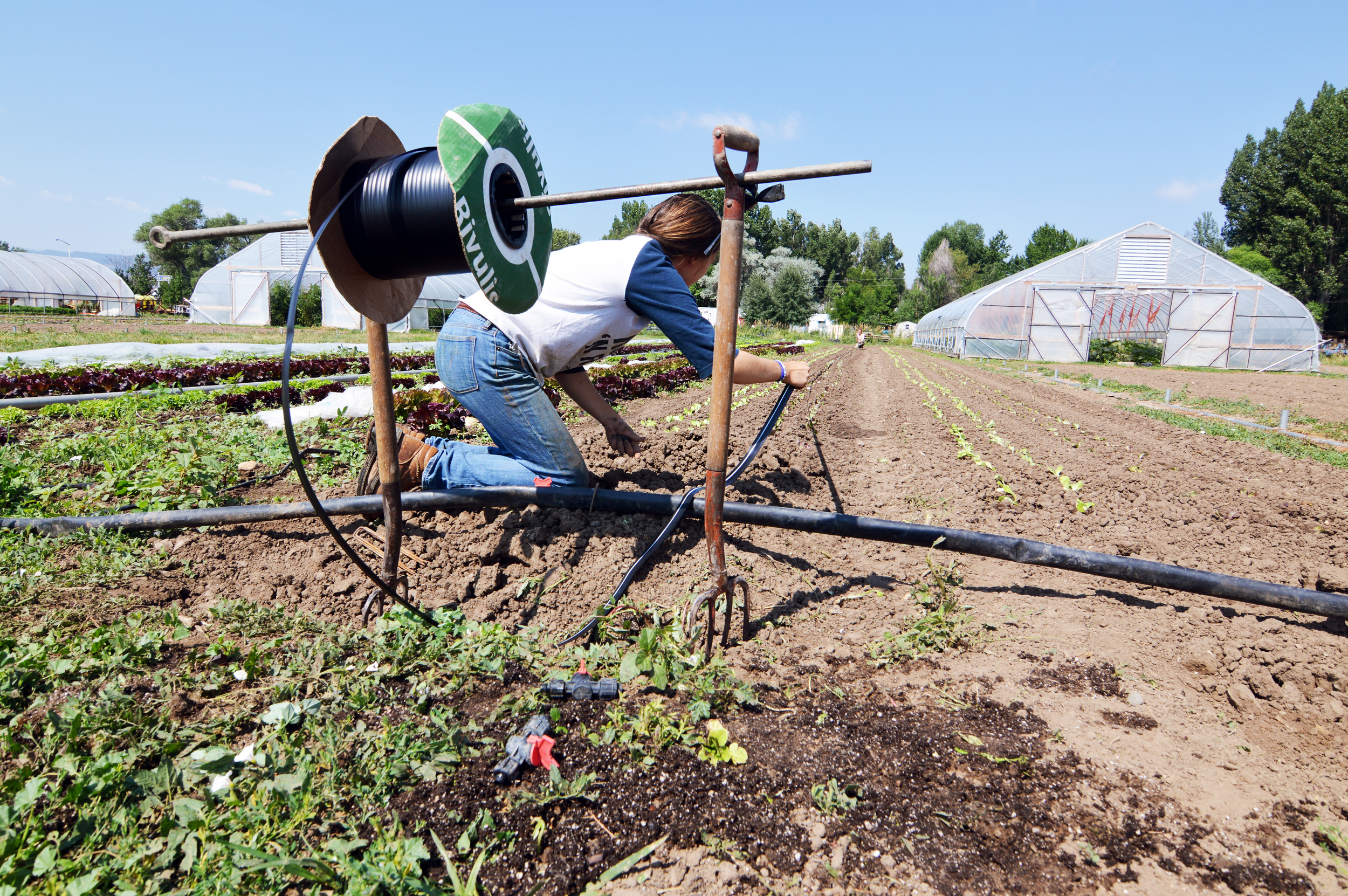 Native Hill Farm Interns working hard to lay drip lines. (photo by Claire Burnett)