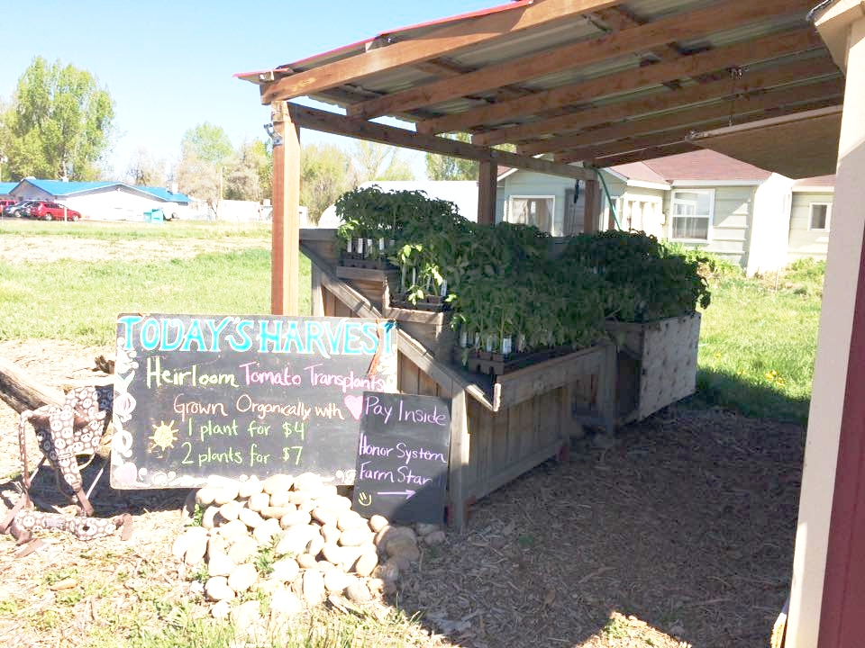 Native Hill Farm Stand is open every day from 8am-6pm. Come on by!